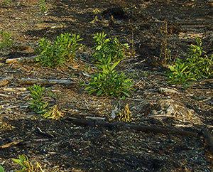 cortafuegos y prevención de incendios