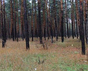 eliminación de la madera infestada