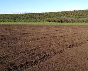 recultivación del terreno